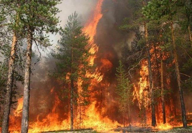 Аномальная жара ожидается до конца недели в Волгодонске