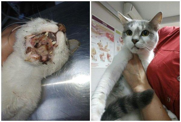 В Волгодонске врачи спасли кота, получившего серьезные травмы