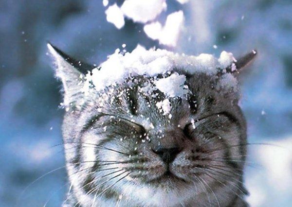 Стало известно, выпадет ли снег на Новый год в Волгодонске