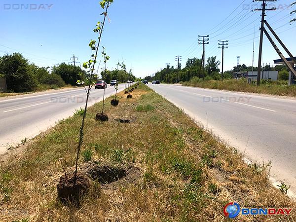 Волгодонцам рассказали почему деревья в городе сажают в 40-градусную жару