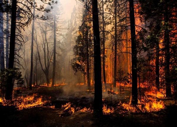 В Волгодонске объявили штормовое предупреждение в связи с высокой пожароопасностью