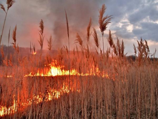В Цимлянском, Константиновском и Морозовском районах сохранится чрезвычайная пожароопасность